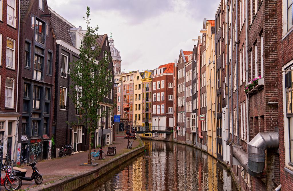 Amsterdam August Leaves